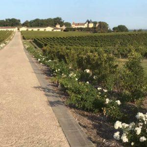 Allée de rosiers, Château Yquem