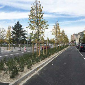 Plantation Arbres, Montauban